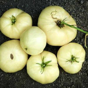 tomate great white